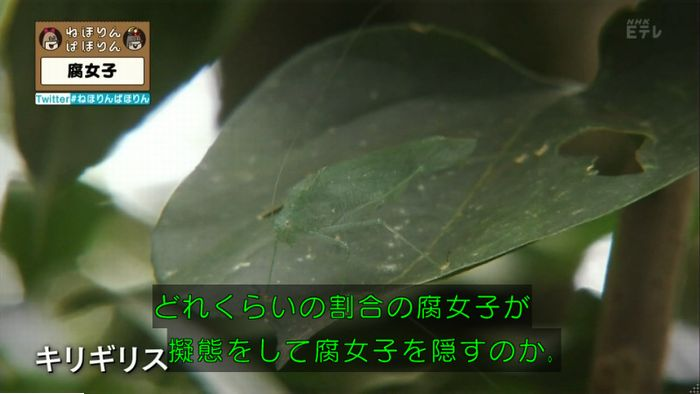 ねほりん腐女子回のキャプ371