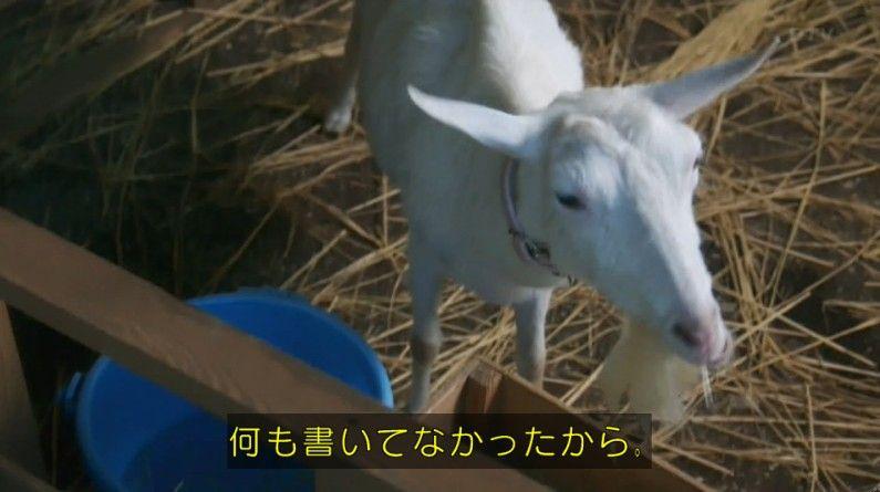 いきもの係 4話のキャプ243