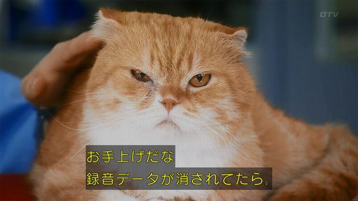 警視庁いきもの係 8話のキャプ536