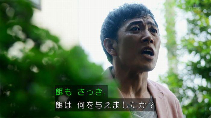 警視庁いきもの係 8話のキャプ317