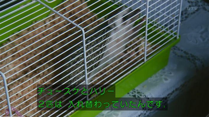 警視庁いきもの係 9話のキャプ389