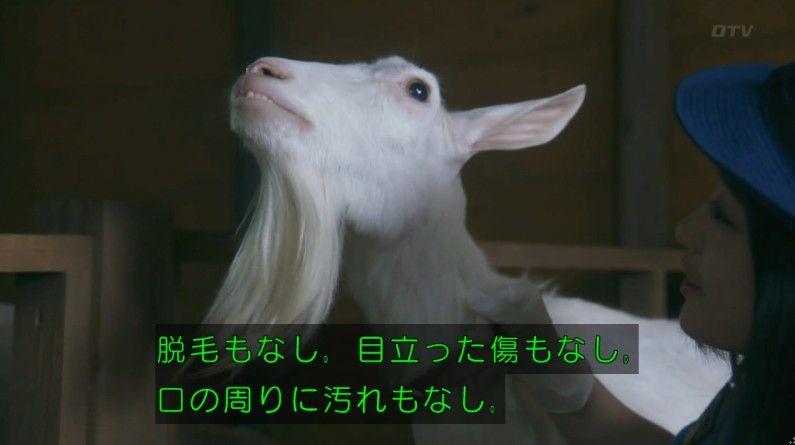 いきもの係 4話のキャプ248
