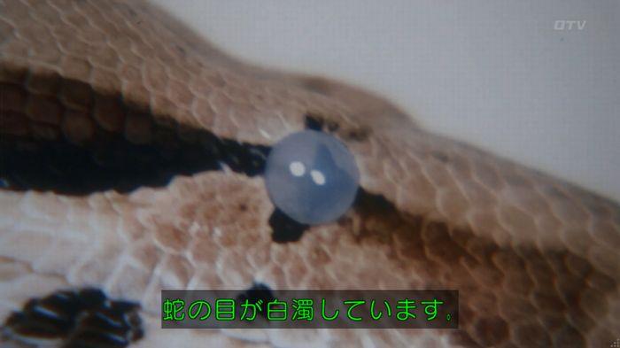 いきもの係 3話のキャプ258