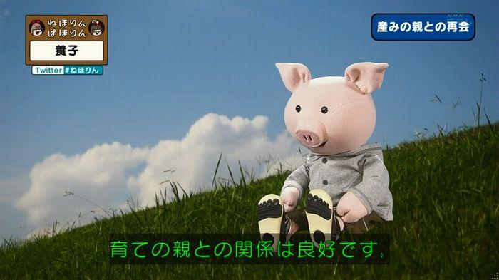 ねほりん 養子回のキャプ336