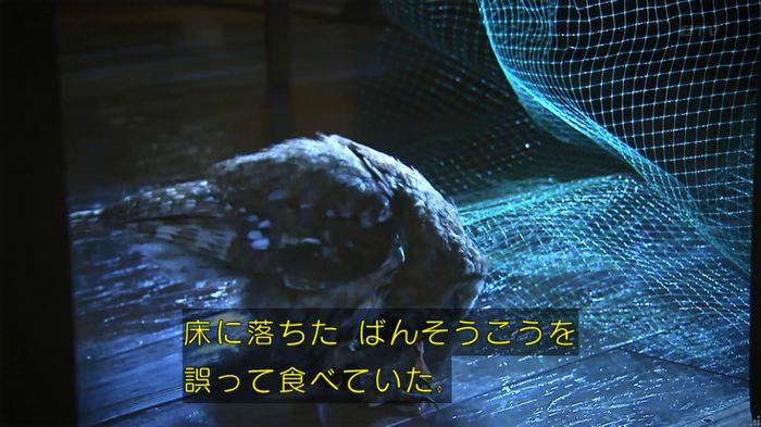 警視庁いきもの係 8話のキャプ732