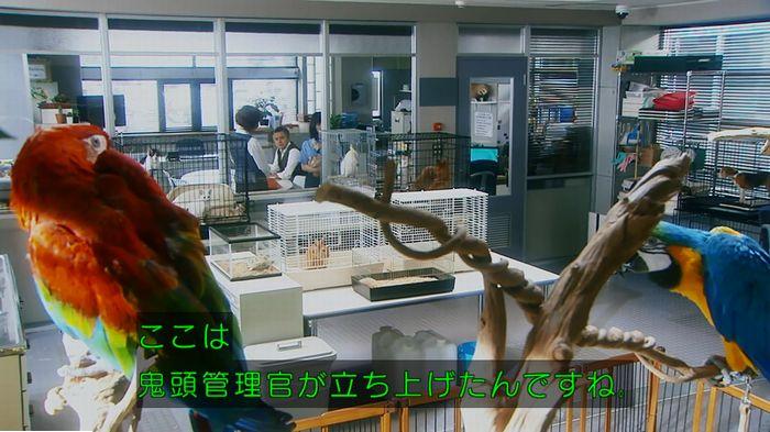 警視庁いきもの係 最終話のキャプ131