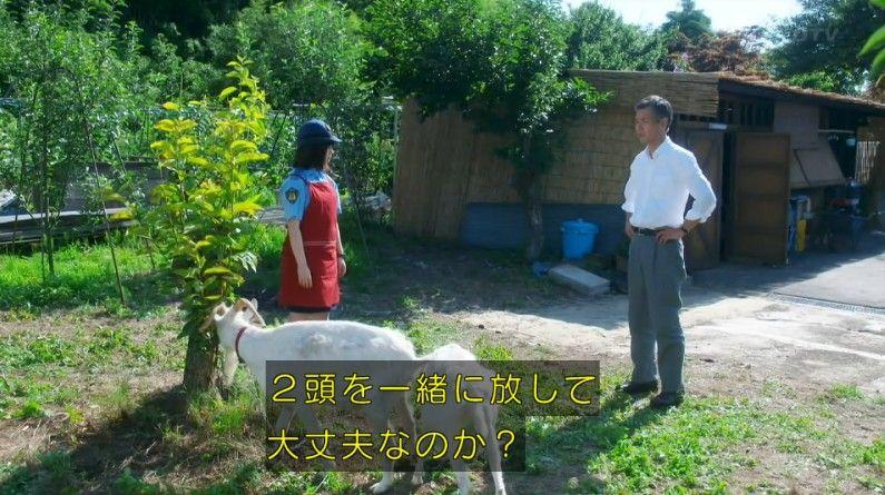 いきもの係 4話のキャプ259