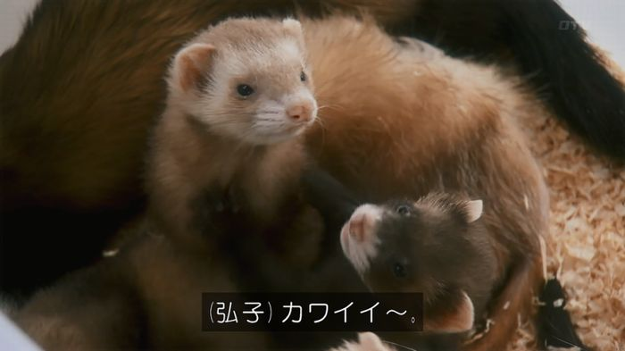 警視庁いきもの係 8話のキャプ39