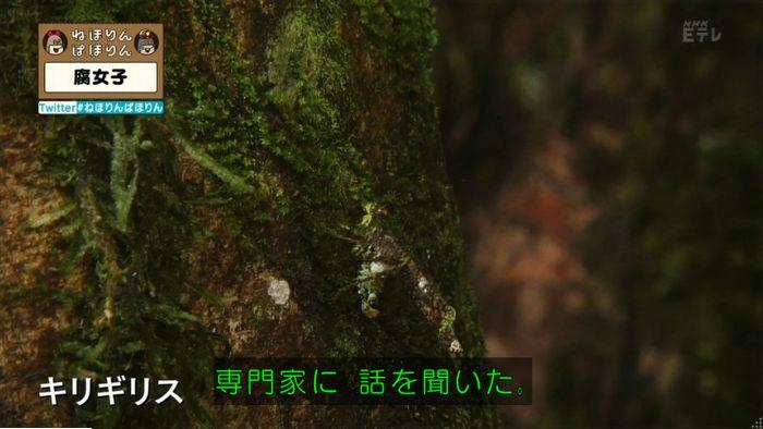 ねほりん腐女子回のキャプ372