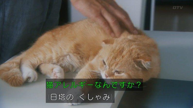 いきもの係 4話のキャプ479