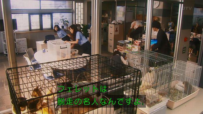 警視庁いきもの係 8話のキャプ419