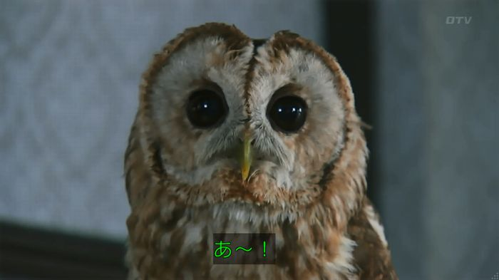 警視庁いきもの係 8話のキャプ173