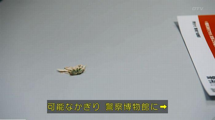 警視庁いきもの係 最終話のキャプ436