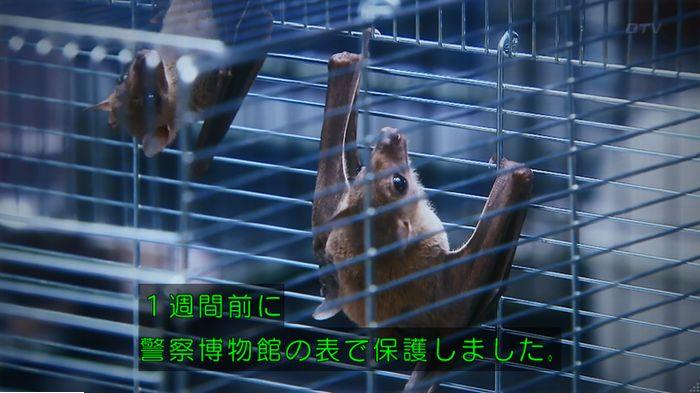 警視庁いきもの係 最終話のキャプ414