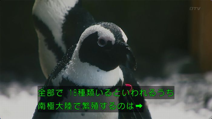 いきもの係 2話のキャプ26