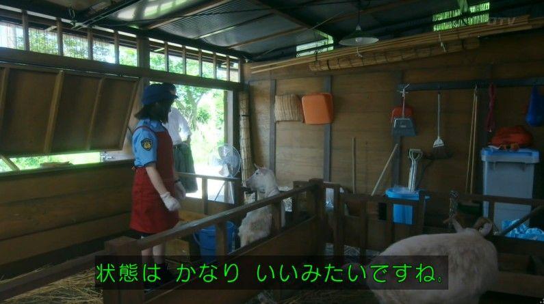 いきもの係 4話のキャプ250