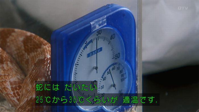いきもの係 3話のキャプ166