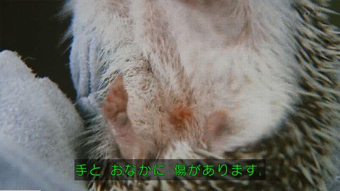 警視庁いきもの係 9話のキャプ189