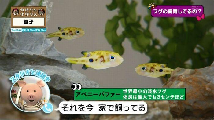ねほりんぱほりんのキャプ458