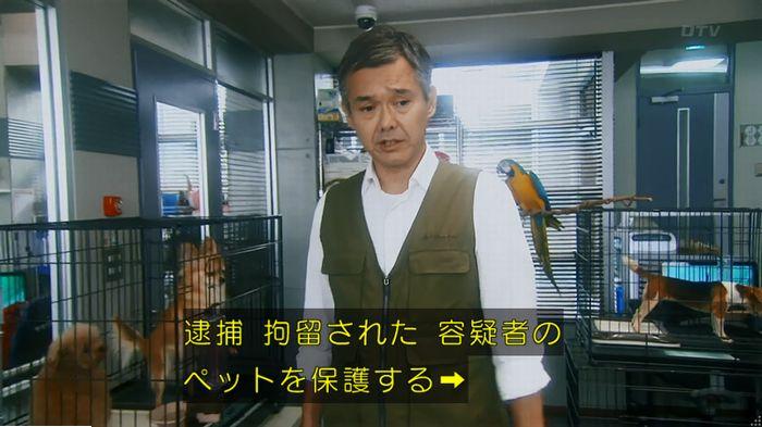 警視庁いきもの係 最終話のキャプ140