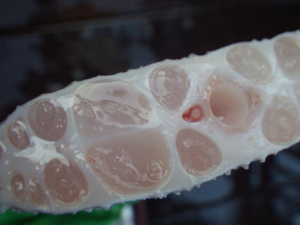 閲覧注意】リュウグウノツカイの美味しい食べ方