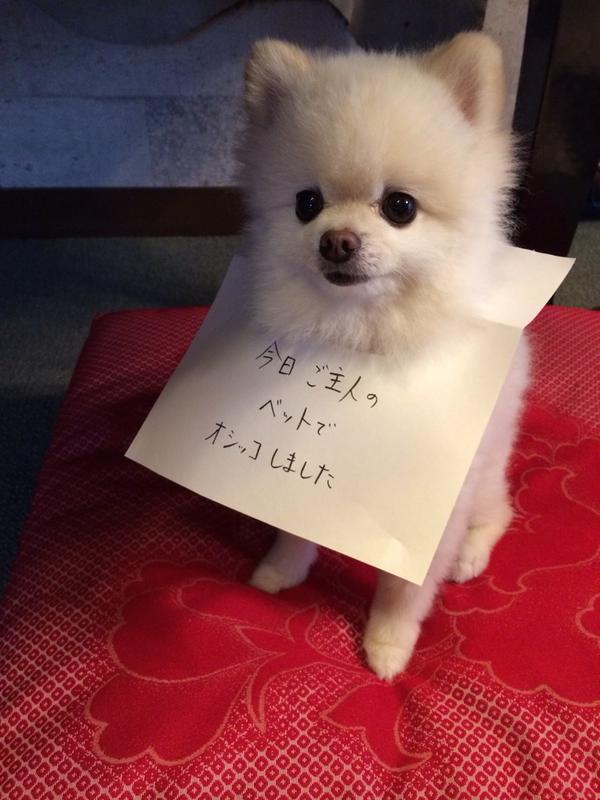 反省文と犬の面白い壁紙pc
