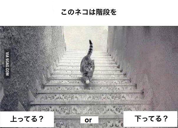この猫は階段を、上ってる?下ってる? どっちに見えるかで池沼かどうかわかるらしい