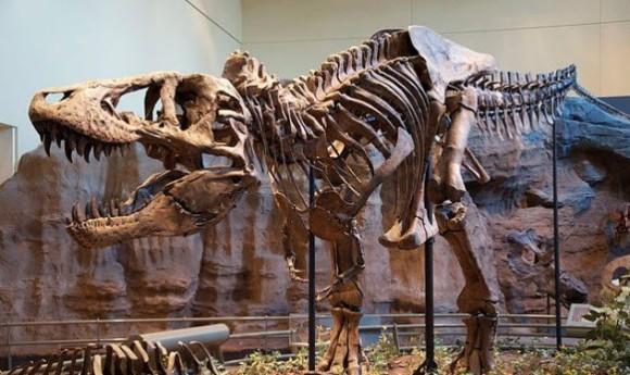 恐竜の頂点ティラノサウルス