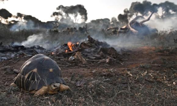 地球はついに6回目の大量絶滅に...