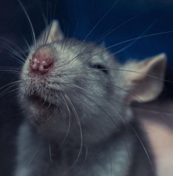 ネズミ 6