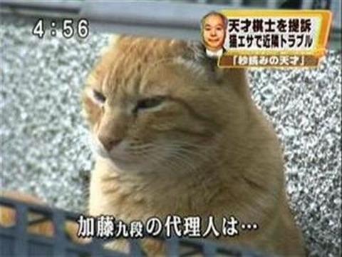 http://livedoor.4.blogimg.jp/rabitsokuhou/imgs/a/9/a998f993-s.jpg