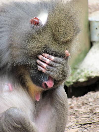 ゚∀゚)ゞカガクニュース隊:「見猿...